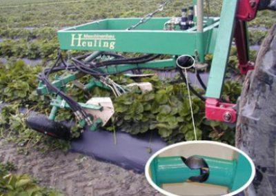 Braškių auginamų ant pakeltų vagų atžalų (ūsų) pjoviklis