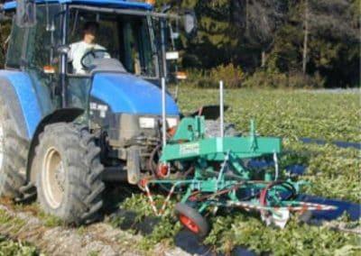 Braškių atžalų (ūsų) pjoviklis auginamų ant vagų kabinamas ant traktoriaus priekio